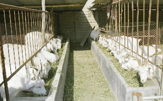 陕西吴旗县榆树沟村白清英家的羊圈.