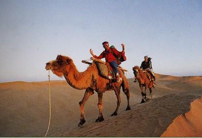 新疆戈壁骆驼风景原图