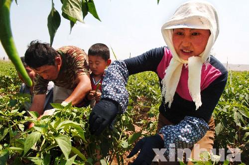宁夏农垦灵武农场积极推进文化建设