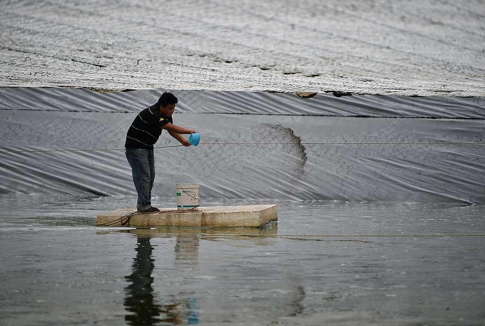 宁夏贺兰:优化渔业产业结构