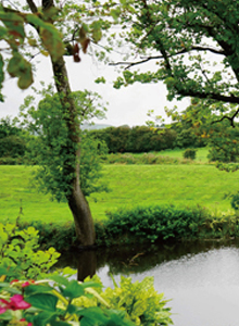 永寧縣:構建綠網 打造綠島