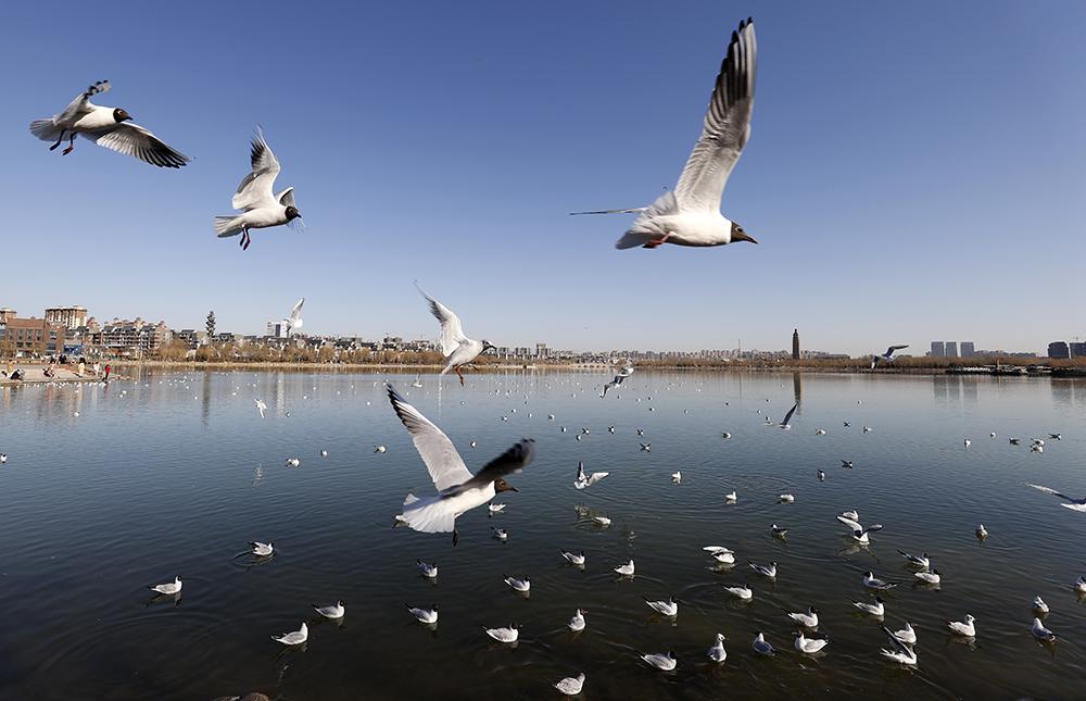 春到塞上 鷗鳥翔集