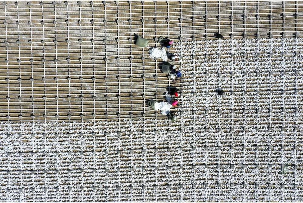 寧夏石嘴山:修復湖泊濕地生態