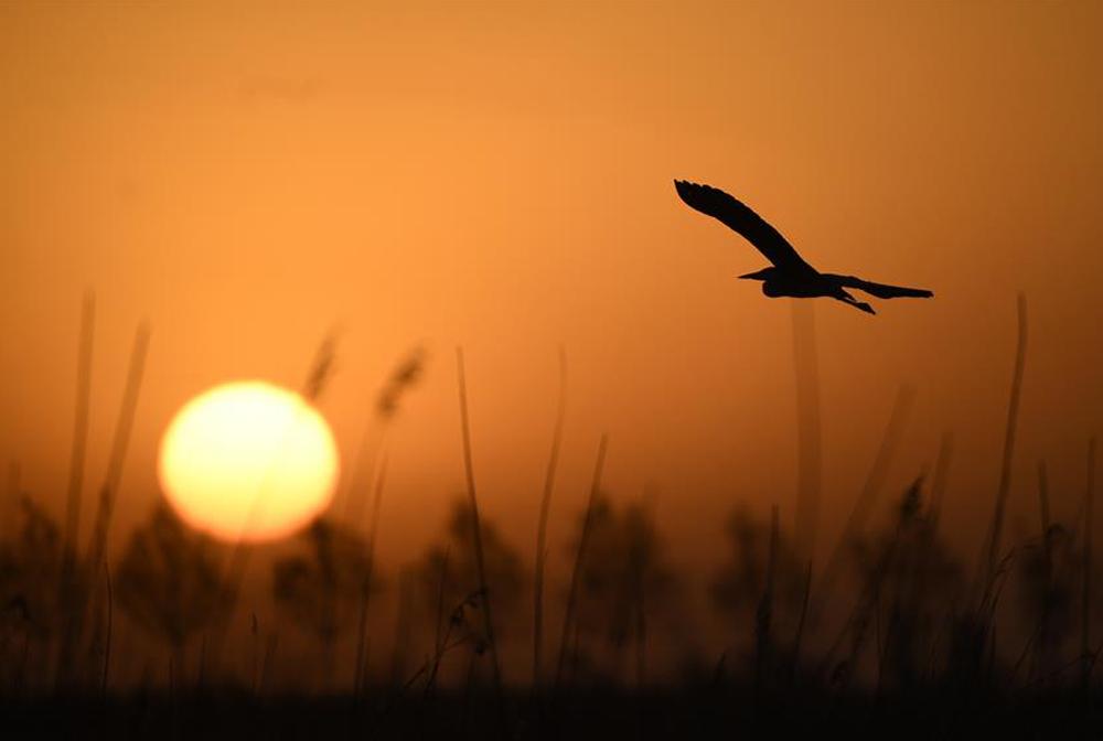 依沙傍水 候鳥蹁躚