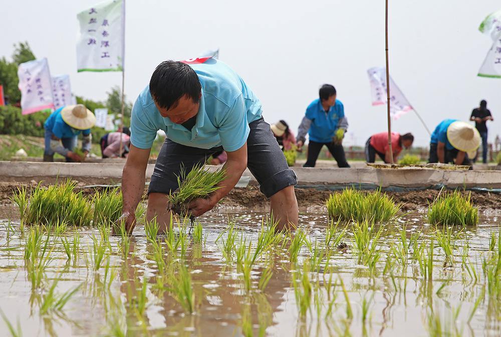 寧夏銀川:文旅融合促鄉村旅遊