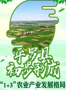 """平羅縣:初步形成""""1-3""""農業産業發展格局"""