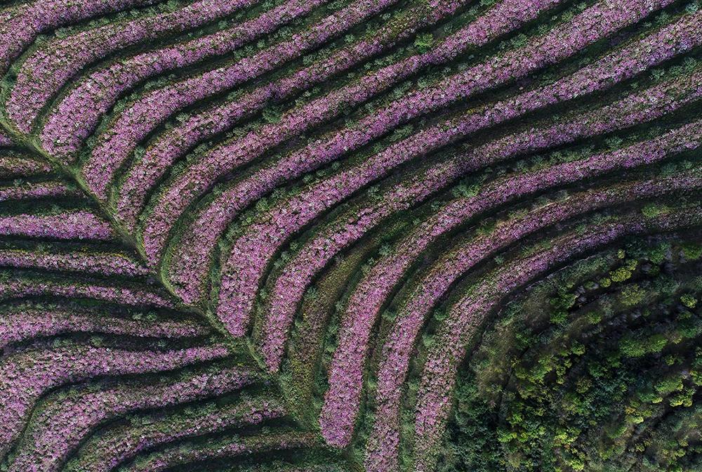 寧夏西吉:林草産業繪就五彩旱垣