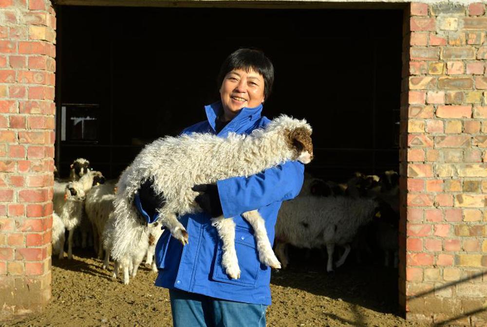 寧夏紅寺堡:高品質灘羊養殖促增收
