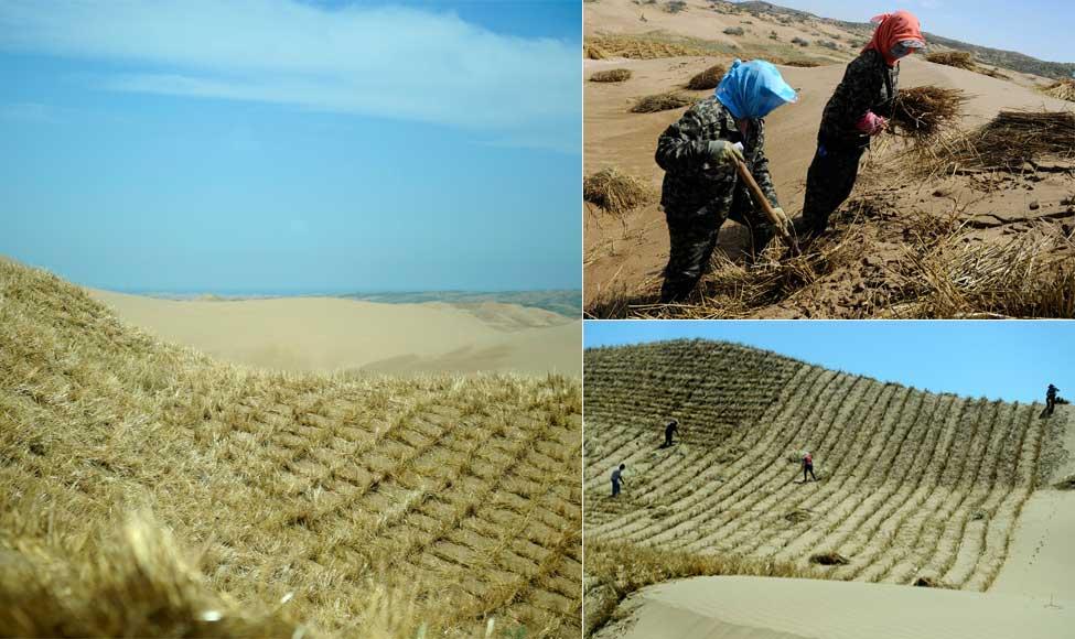 小小草方格助沙漠变绿洲